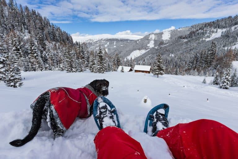 Snowshoeing With Dogs