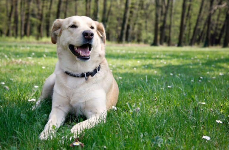 Springtime Safety Tips for Dogs