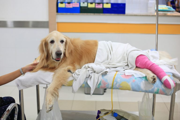 A Dog with ACL Torn