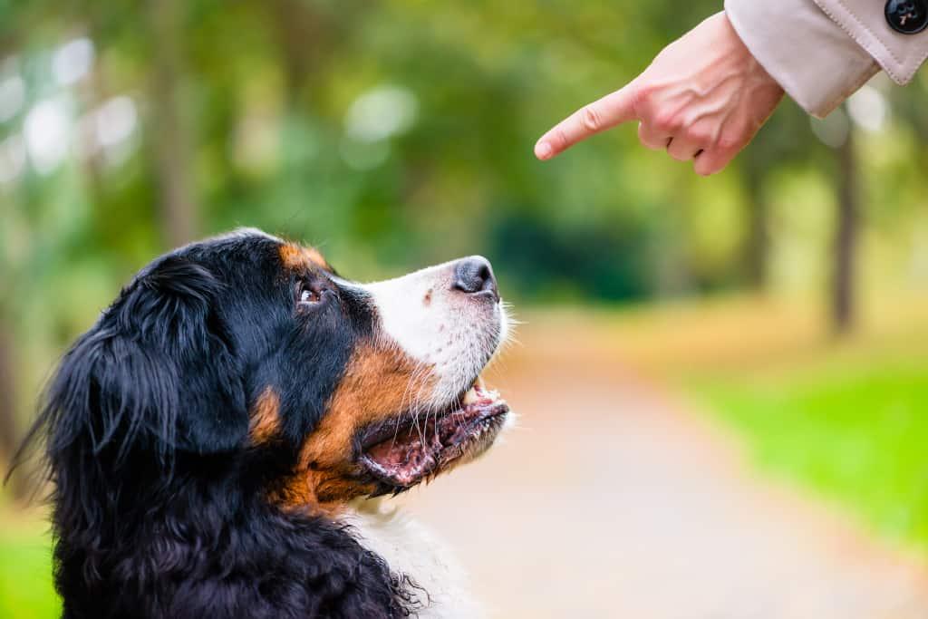 Command a Dog