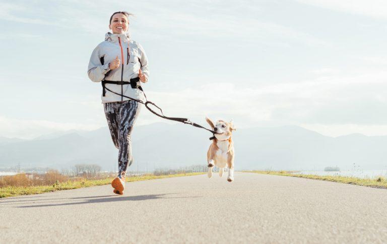 Dog Running Gear