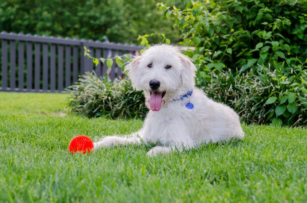 Dog with Chew Toy in Backyard