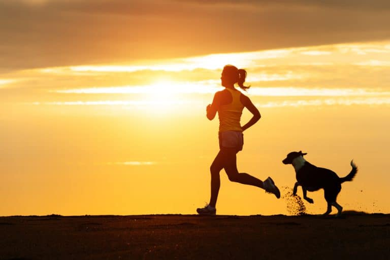 Dogs for Running