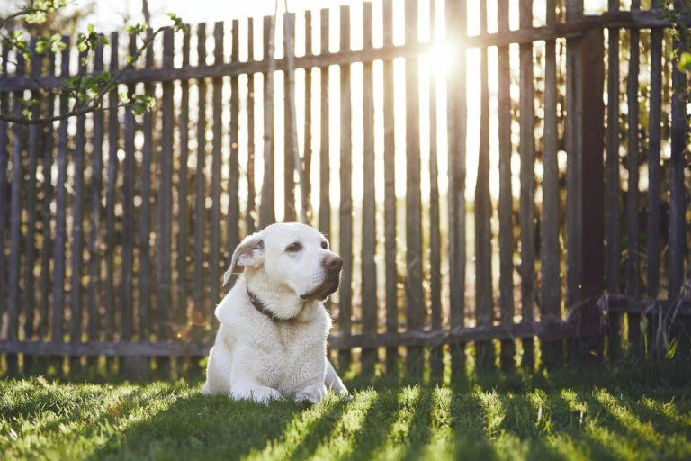 How to Build a Dog Run in Your Backyard