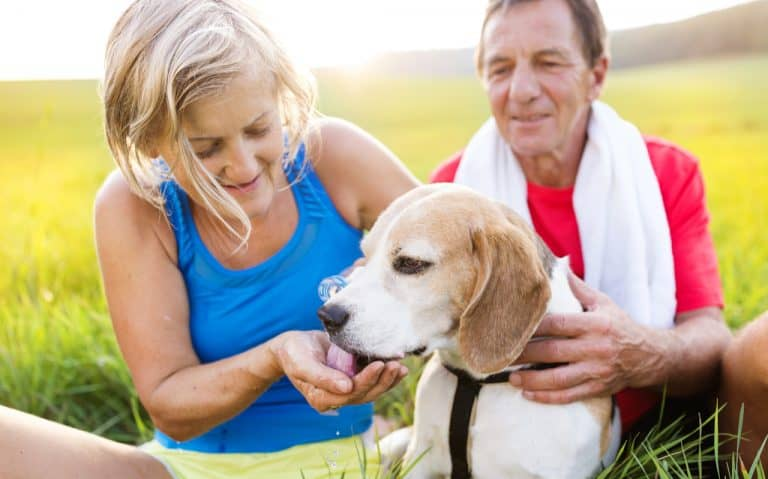 How to Carry Water for Dogs While Running
