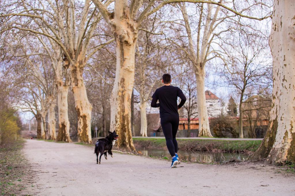 Long Distance Running Dog Breeds