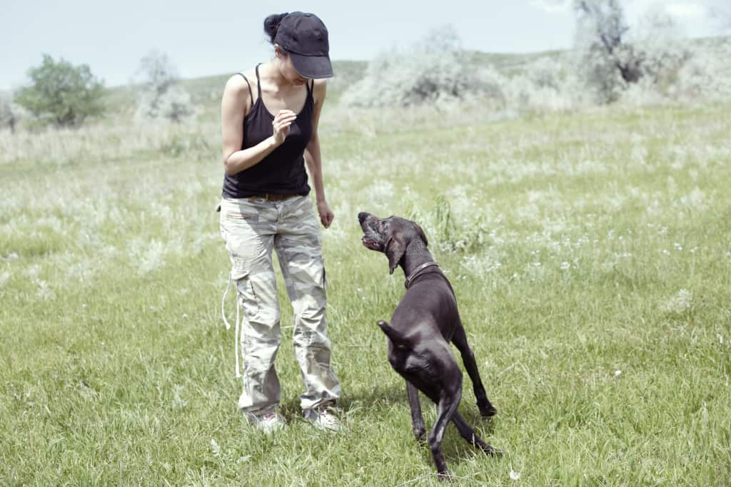 Train a Dog for Running Off-Leash