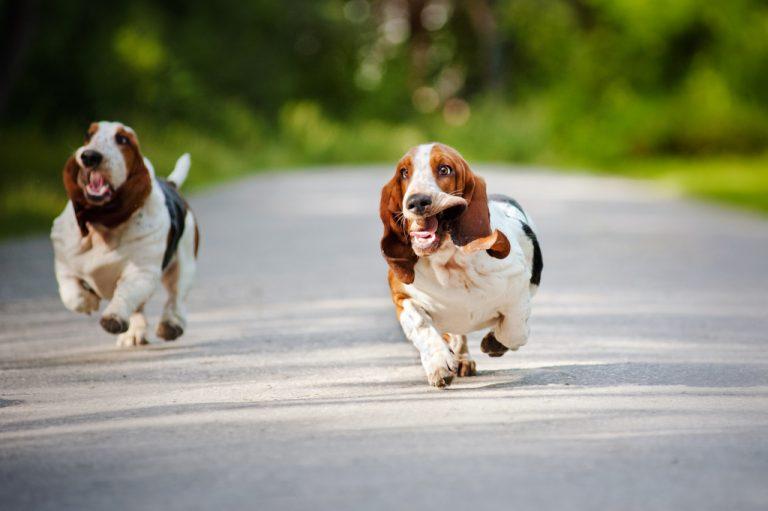 Worst Trail Running Dog Breeds