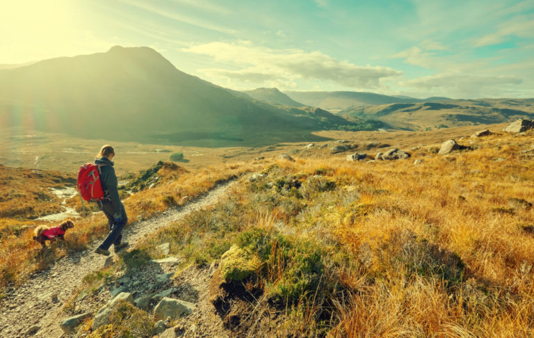 How Far Can a Dog Hike