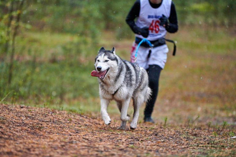 Top Canicross Dog Breeds