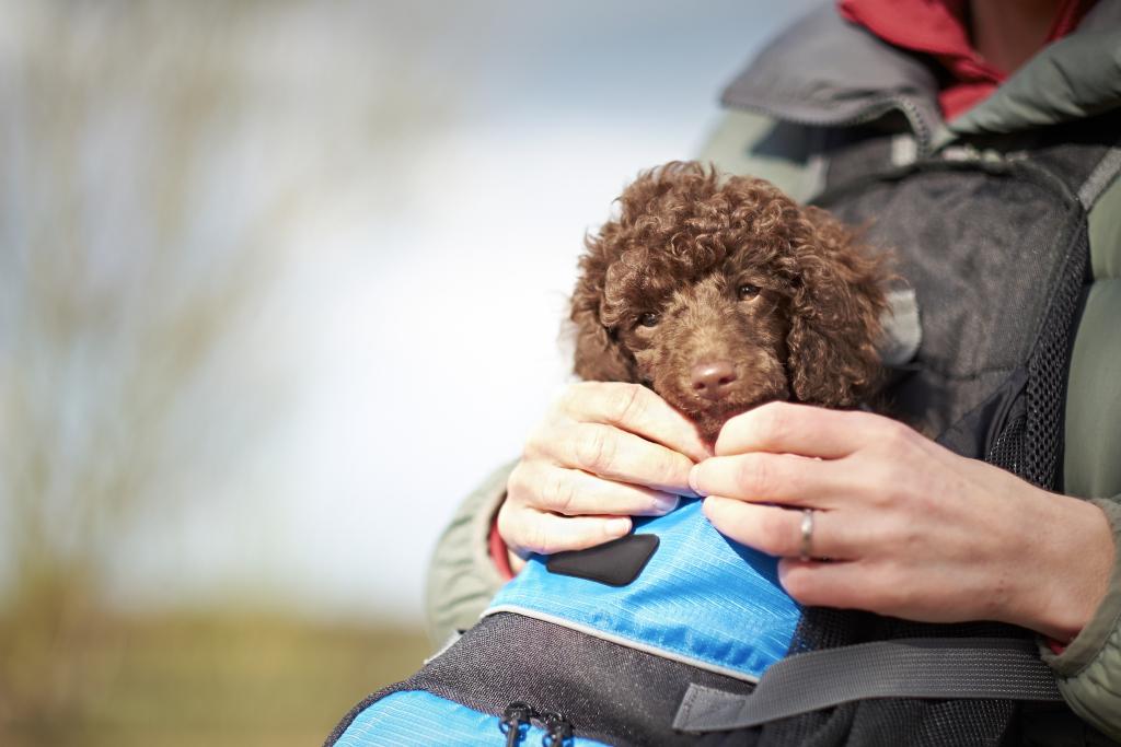 Dog in Carrier Backpack