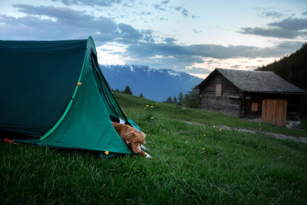 Backyard Camping with Dog