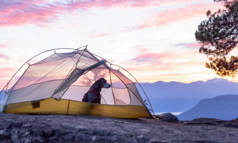 Dog Camping Gear
