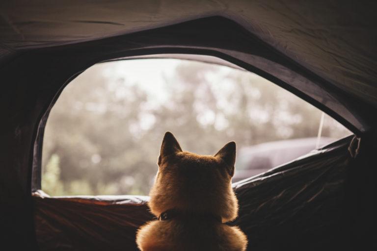 Dog Inside Tent