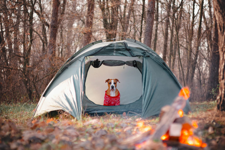 Dog in a Tent with Sweater