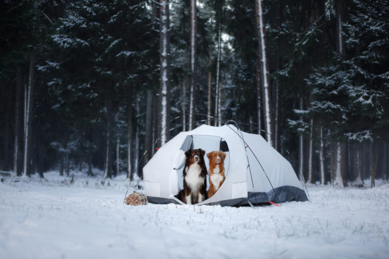 Dogs In Winter Camping Tent