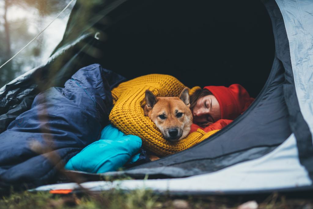 Girl Calming a Dog