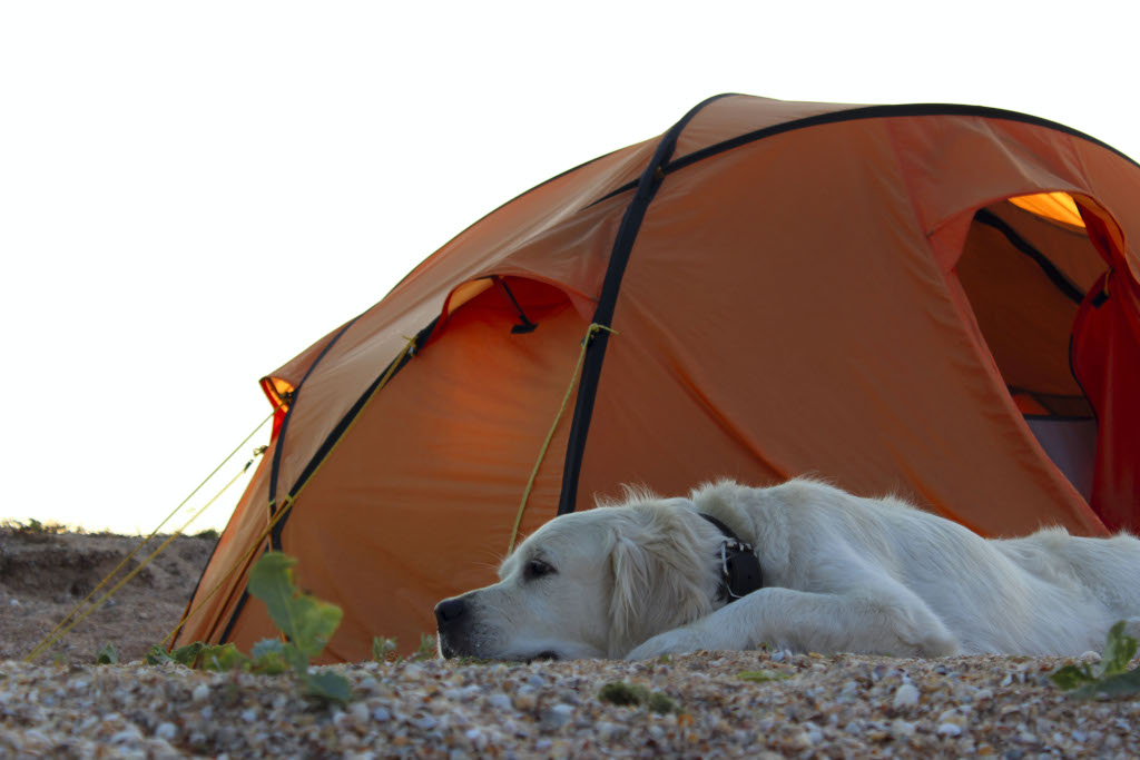 Where Can Dogs Sleep in Camping Tents